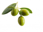 Olives-x3-with-leaves-xxs.png