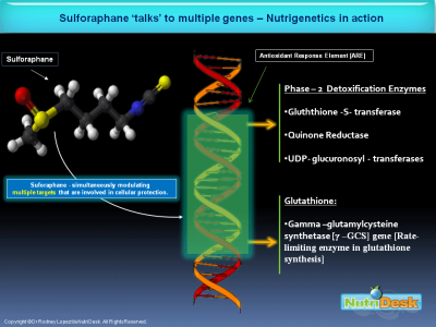 Sulforaphane-&-ARE-Genes-xxspng8.png