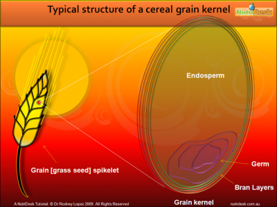 grain-structure.png